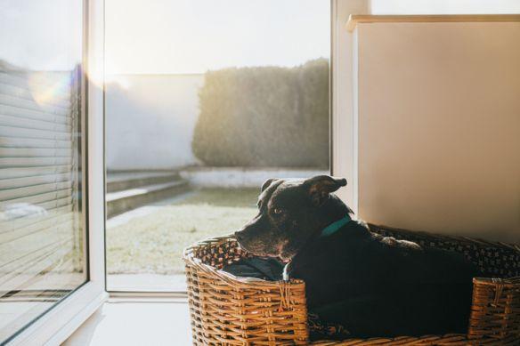 Dog in a Wicker Basket
